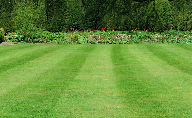 How to get the best looking lawn
