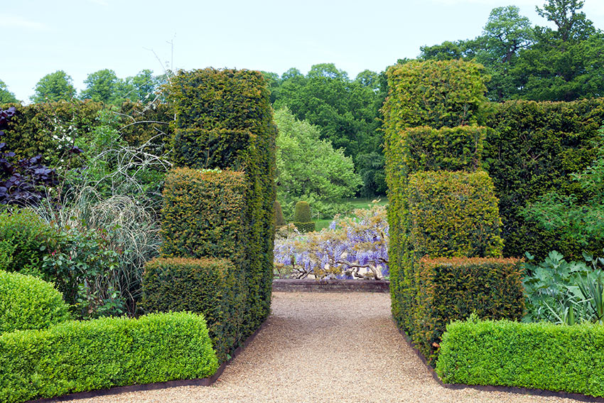 How to Look After Your Trees, Shrubs and Hedges